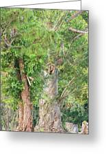 Craggy Tree For Will Greeting Card