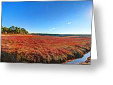 Cranberries Greeting Card