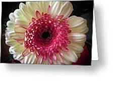 Cranberry And White Greeting Card