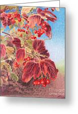 Cranberry Bush In Autumn Greeting Card by Elizabeth Dobbs