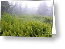 Cranberry Glades Early Morning Greeting Card