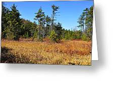 Cranberry Glades Greeting Card