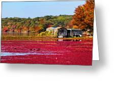 Cranberry Juice Greeting Card