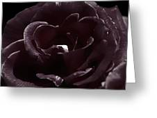 Cranberry Rose Greeting Card by Clayton Bruster