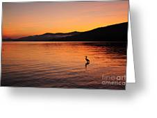 Crane At Sunrise Greeting Card
