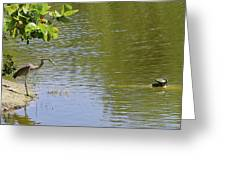 Crane Observing Balancing Turtle Greeting Card