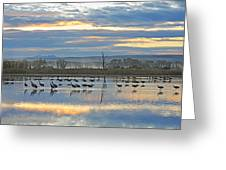 Cranes At Dawn 1 Greeting Card