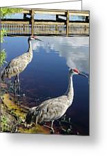 Cranes At The Lake Greeting Card