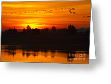 Cranes In The Morn Greeting Card