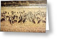 Cranes In The Morning Mist Greeting Card