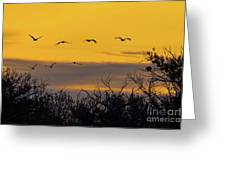 Cranes In The Sunrise Greeting Card