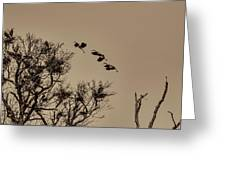 Cranes Nesting Greeting Card