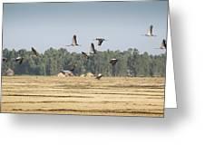 Cranes Over Ethiopia Greeting Card