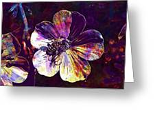 Cranesbill Flower Close Bee Insect  Greeting Card