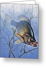 Crappie Cover Tangle Greeting Card
