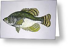 Crappie Fish Of Usa  Greeting Card