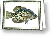 Crappie Print Greeting Card by JQ Licensing