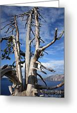Crater Lake Tree Greeting Card