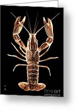 Crawfish In The Dark - Sepia Greeting Card
