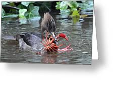 Crayfish Lunch Greeting Card