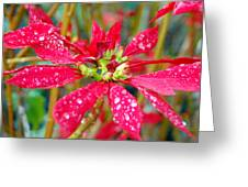 Crazy Dewy Red Flower Greeting Card