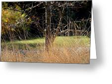 Crazy Grasses Greeting Card