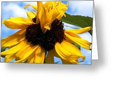 Crazy Sunflower Look Greeting Card