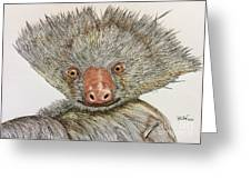 Crazy Two Toed Sloth Greeting Card