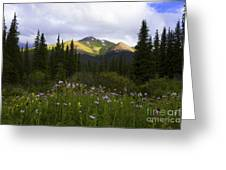 Crazy Wildflowers Greeting Card by Barbara Schultheis