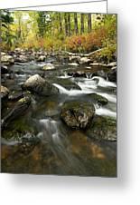 Crazy Woman Creek In Autumn Greeting Card