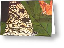 Cream And Orange Butterflies Greeting Card