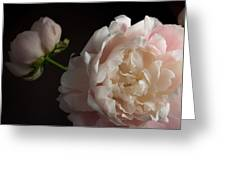 Cream And Pink Greeting Card