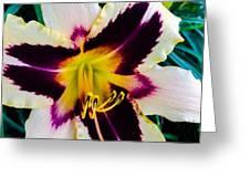 Cream And Purple Lily Macro Greeting Card