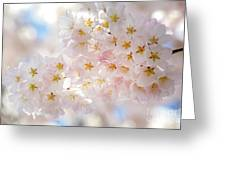 Creamy Blossoms Greeting Card
