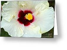 Creamy Hibiscus With Rain Drops Greeting Card
