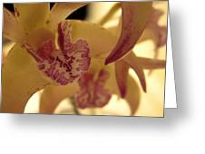 Creamy Orchid Greeting Card