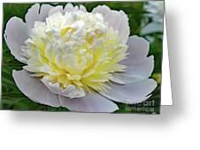 Creamy Petals - Double Peony Greeting Card