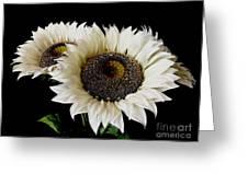 Creamy Sunflowers Greeting Card