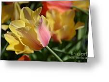 Creamy Yellow Tulip Greeting Card