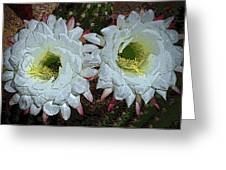 Created By A Cactus Greeting Card