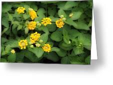 Creative Yellow Lantanas Greeting Card