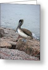 Creatures Of The Gulf - His Best Side Greeting Card