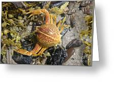 Creatures Of The Gulf - Lost Treasure Greeting Card