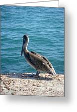 Creatures Of The Gulf - Lulled By The Waves Greeting Card