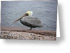 Creatures Of The Gulf - The Squatter Greeting Card