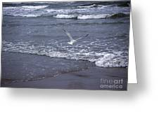 Creatures Of The Gulf - Tranquility Greeting Card