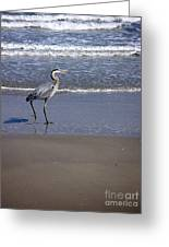 Creatures Of The Gulf - Walk This Way Greeting Card