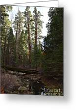 Creek And Giant Sequoias In Kings Canyon California Greeting Card
