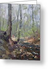 Creek At Lockport Natural Trail Greeting Card