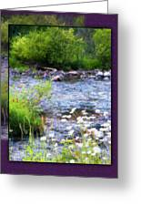 Creek Daisys Greeting Card